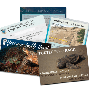 Turtle Nest Adoption